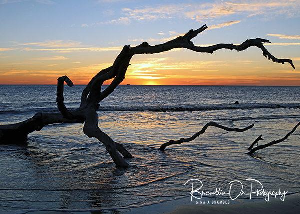 Driftwood Beach Sunrise print for sale.