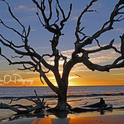 Driftwood Beach Sunrise Tree print for sale.
