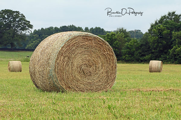 Good Hope GA Hay bale print for sale.