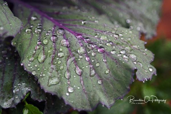 Rain on leaf for sale