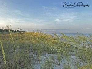 SJB Morning Sea Oats print for sale.