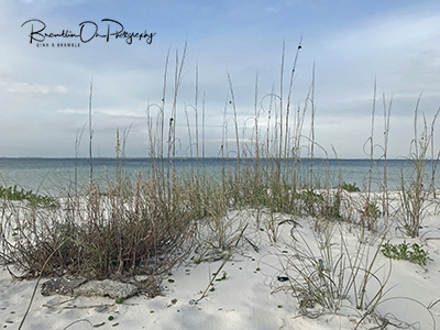 Winter sea oats print for sale.
