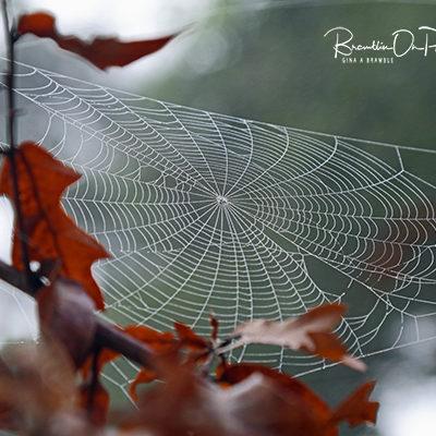 Summer spiderweb print for sale.