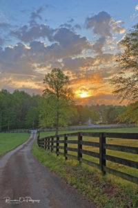 Pasture Tree Sunrise