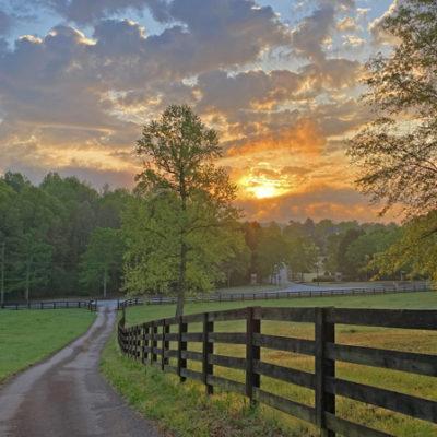 Pasture Tree Sunrise print for sale.
